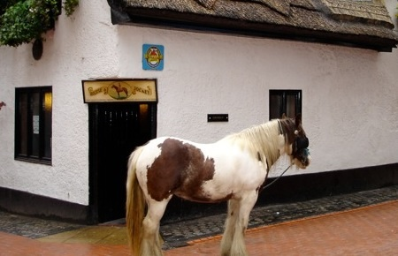 Get On Yer Horse. Chelsea Are In Town